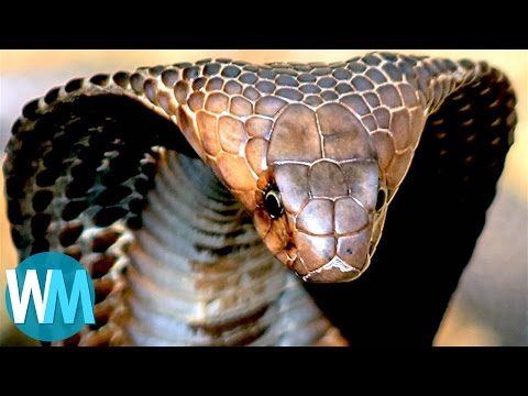 Thumbnail: Top 10 TERRIFYING Snakes That Will Probably KILL You