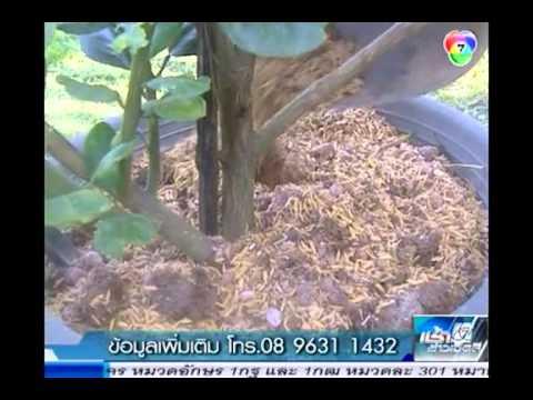 สารคดีเกษตร วิธีการปลูกไม้ผลในกระถาง
