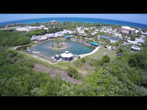 Florida Oceanographic Coastal Center in Stuart, FL - South Florida Attractions