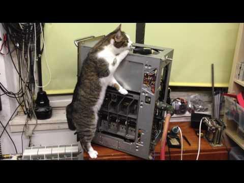 Manci cica és az ML R-1251 katonai vevő #2