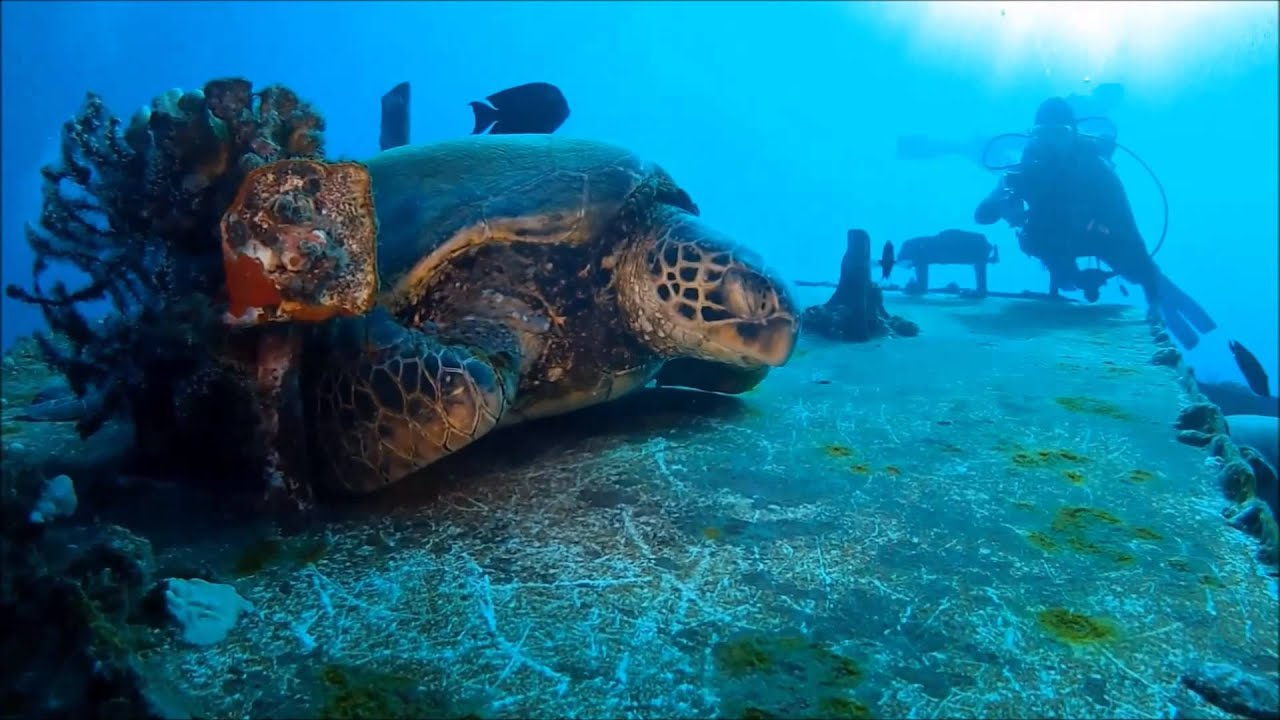 Scuba Diving St. Anthony's Wreck In Maui, Hawaii