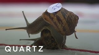 The 2017 World Snail Racing Championships