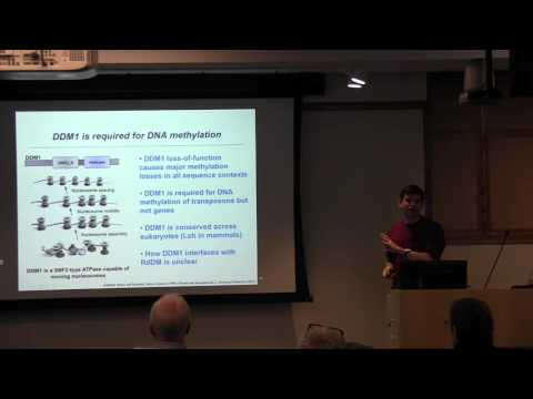 Daniel Zilberman: Epigenetic inheritance of DNA methylation within chromatin