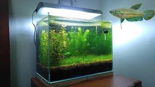 3 Months Update - New Fish (Sparkling Gourami) No filter, No CO2, NO Ferts 5 Gallon Nano Tank