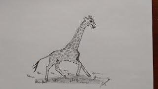 Como Dibujar una Jirafa. Caricatura. How to Draw a Giraffe. Cartoon.