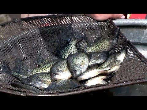 Southeast ND & Red River Fishing Forecast