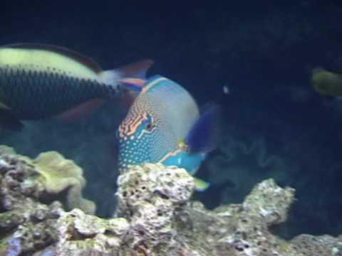Saltwater Fish, Saltwater Aquariums and Marine Aquarium Fish