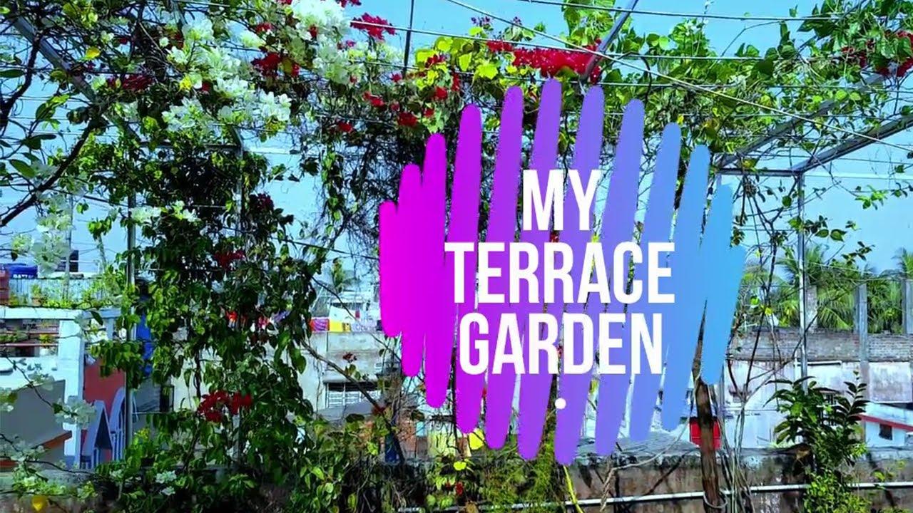 Terrace Garden | Rooftop Garden - YouTube