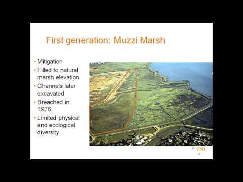 40+ Years of Wetland Restoration in the San Francisco Bay