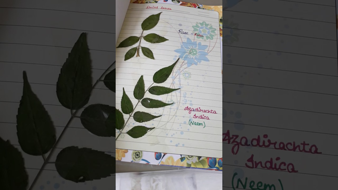 Herbarium File