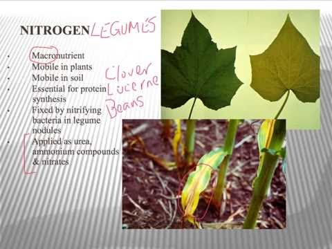 Intro to Plant Nutrition