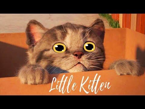 Fun Pet Care Kids Game - Little Kitten My Favorite Cat - Colors Education Cartoon Game for Kids