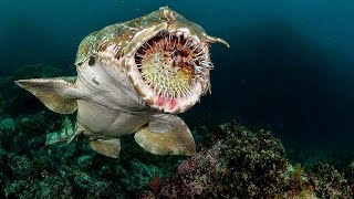 5 Real Sea MONSTERS Caught ON CAMERA