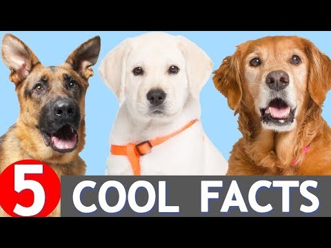 5 Cool Facts About Dogs You Might Not Know
