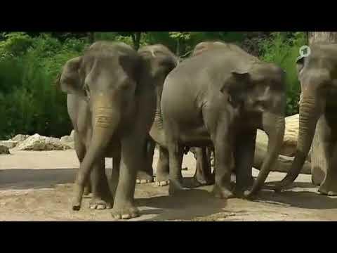 Folge 3  Staffel 5  Nashorn, Zebra & Co.  Folge 119  Wann bei Eleten der Spaß aufhört NoHD