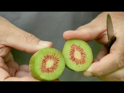 Native Chinese fruit cultivated with a New Zealand twist