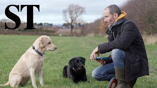 Olive and Mabel: One man and his dogs | Sunday Times Magazine
