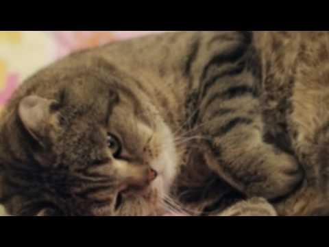 Gatinhos com sono (Cute Sleeping kittens)
