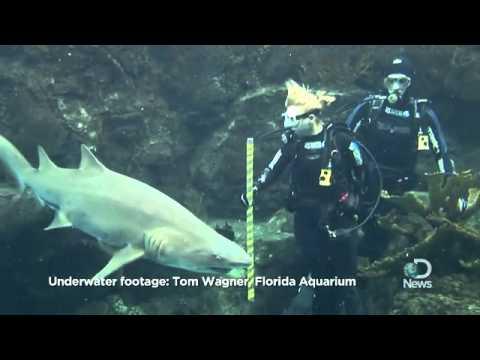 Animals Cool Jobs Shark Traffic Cop  Discovery News