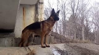 Немецкая овчарка любимое место под мостом !