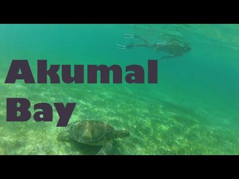 Swimming with Sea Turtles in Akumal Bay - Riviera Maya, Mexico