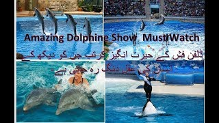 Awesome Dolphin Show |  SeaWorld's  | Dolphin Entertainment show