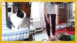 Enclos modulable pour lapin•es | avec Jean-Jean 🐇
