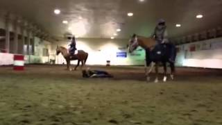 Harlem shake horse style