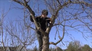 Обрезка плодовых деревьев. Исправление ошибок обрезки(В этом видео мы расскажем про обрезку плодовых деревьев и покажем как исправить ошибки и неправильную обре..., 2016-03-16T14:50:48.000Z)