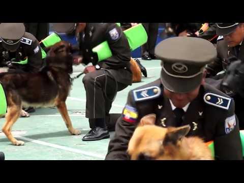 В Эквадоре прошли проводы полицейских собак на пенсию