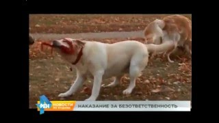75-летюю ангарчанку сильно искусала собака. Пенсионерка в больнице