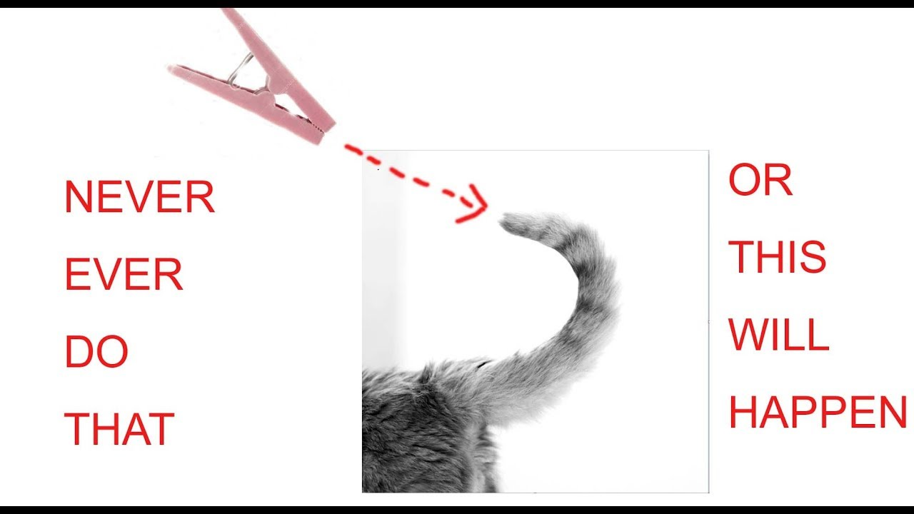 Don't do this to your CAT! my CAT just went Crazy!