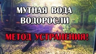 Мутная вода и водоросли в аквариуме. Решение!