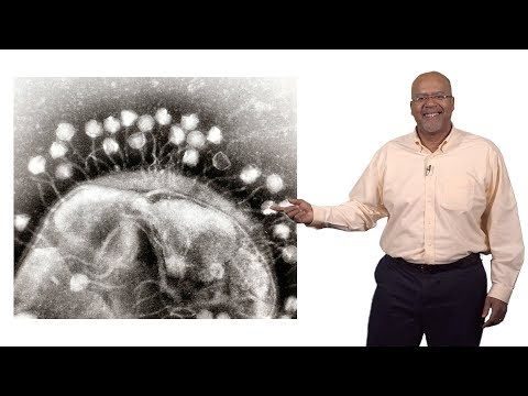 Paul E. Turner (Yale) 3: Phage Therapy