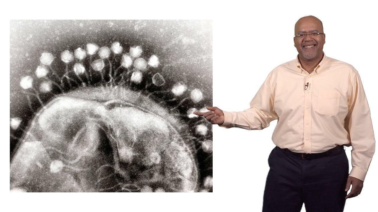 antiparazitare și bacteriofage