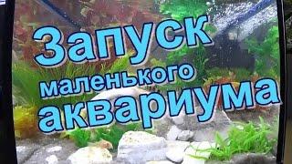 Запуск маленького аквариума с искусственными растениями