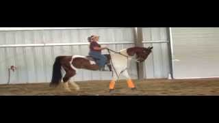Bourbon Neat - No Fear Factor - Double Registered Saddlebred