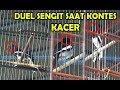 Lomba Kicau Burung Kacer Duel Sengit Kacer Tampil Mempesona Juri Sampai Bigung Hingga Balon  Mp3 - Mp4 Download