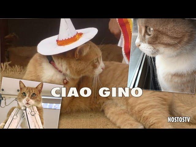 ADDIO GINO: IL GATTO SOCIAL AVEVA 10MILA FOLLOWERS