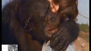 Mengharukan! Simpanse peluk wanita yang menyelamatkannya 25 tahun lalu - BIM 10/06
