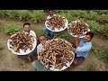 Goat Leg Soup Recipe   Yummy and Healthy Goat Legs Soup    Paaya Cooking by Grandpa