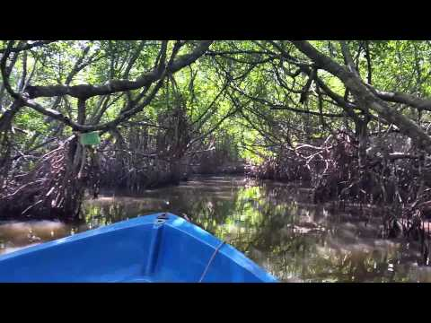 Mangrove Cave near Dalmanuta in Bentota River / Kadolana at Bentota Ganga 20150107 120500