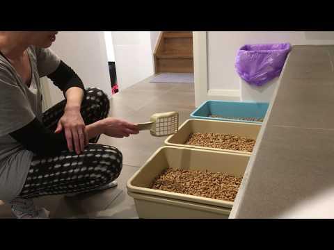 Wood pellet litter demo