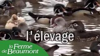 Elevage des animaux Ferme de Beaumont