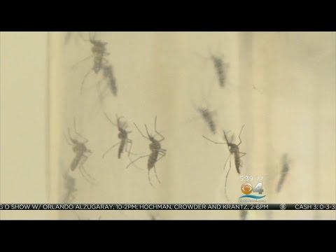 Healthwatch: Zika Virus Spread Through Sexual Contact