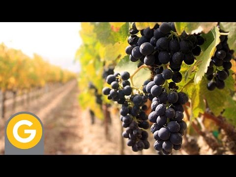 Episodio 1 - Vino Para Principiantes - Introducción al curso from YouTube · Duration:  14 minutes 1 seconds