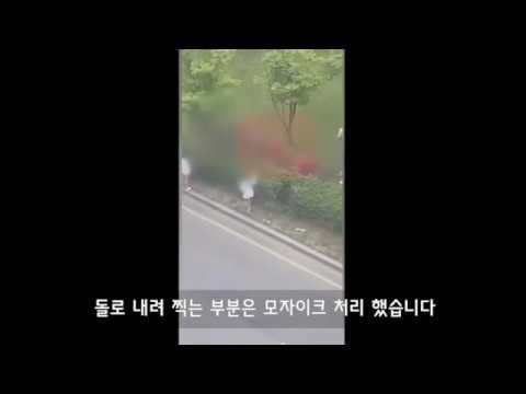 광주 조폭 집단 폭행사건 영상 (살인미수)