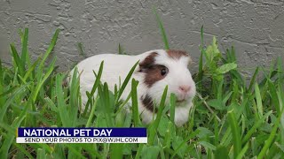 Happy National Pet Day: Celebrating Our Furry Friends
