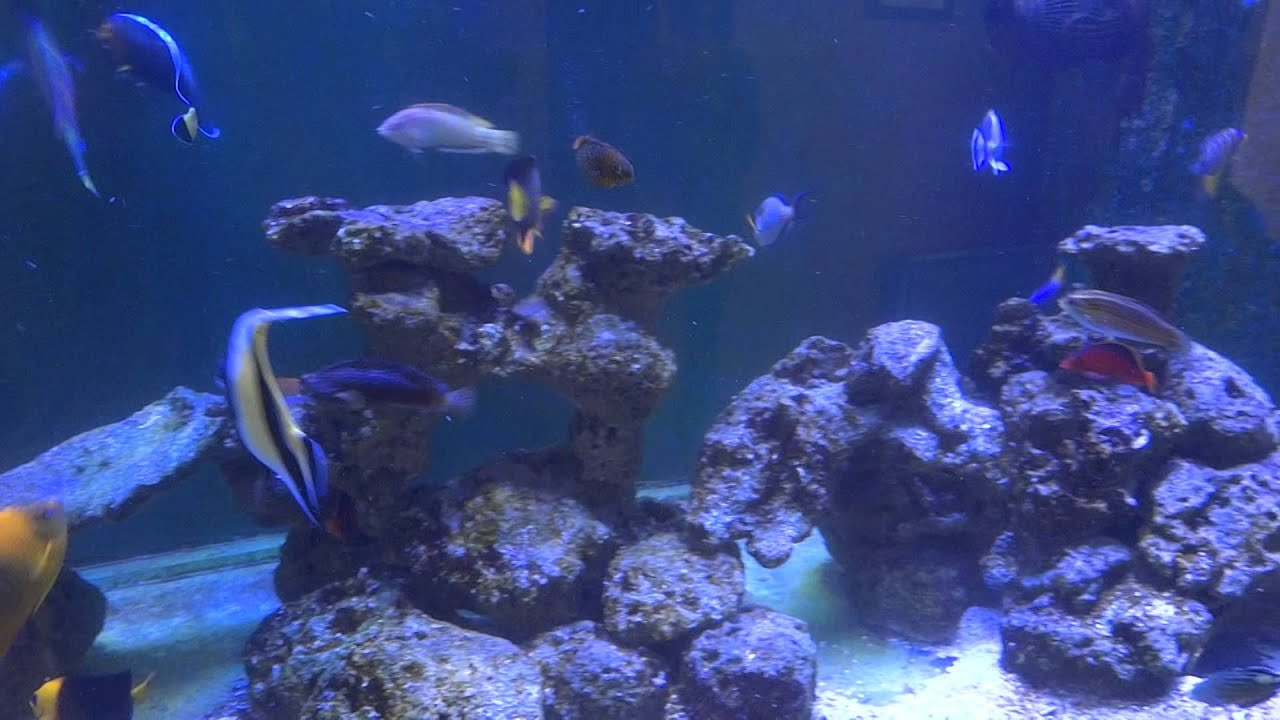 Large fish only saltwater tank youtube for Fish only saltwater tank