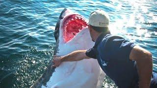 Рыбак спас белую акулу, он не мог и подумать, что она так отблагодарит его